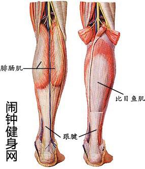 小腿肌肉锻炼方法大全,怎么练小腿肌肉在哪图片(图解