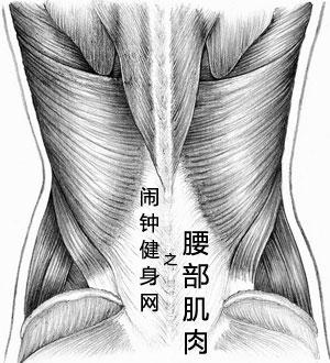 腰部骨骼结构图片