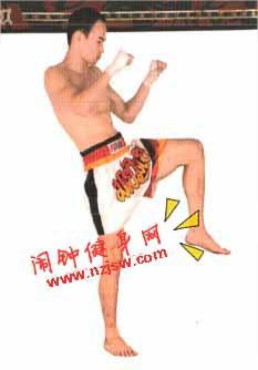 泰拳前后下段蹬踢练习图解教程