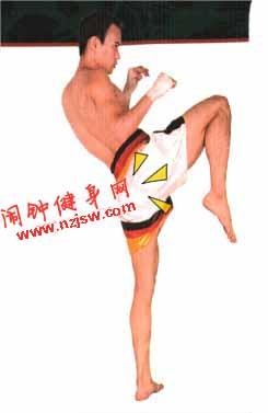 泰拳膝技的基本技法教学