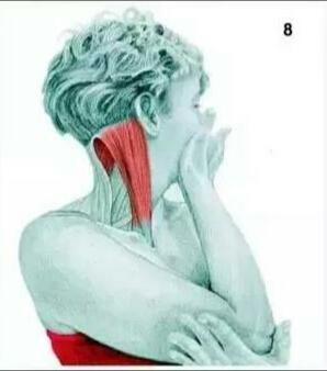 拉伸脖子胸锁乳突肌:扭转颈部伸展【动作图解】