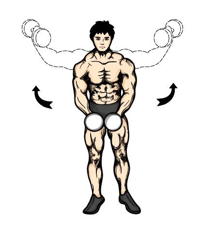 哑铃直臂侧平举,训练三角肌中束的好动作(Dumbbell Lateral Raise)视频和图解
