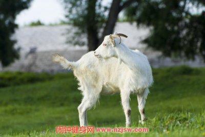 羊心羊肝不能与什么一起吃